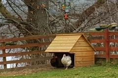 Angie Hatton Chicken Shelter