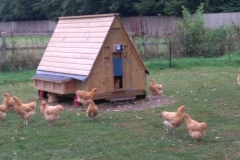 50 bird House