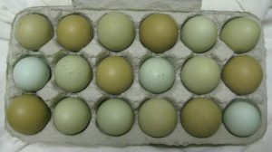 olive egger chicken eggs