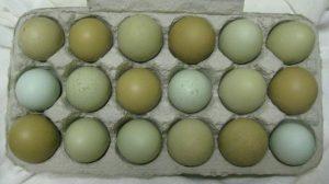 olive egger chicken eggs